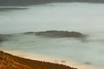 Bosco nella nebbia